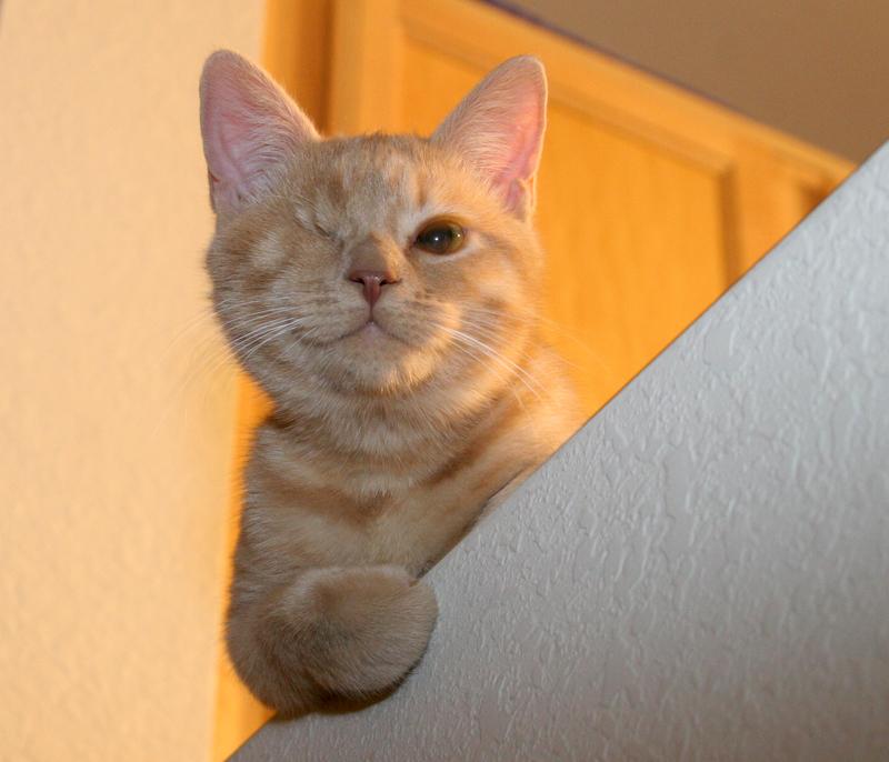 Cat Small Eye