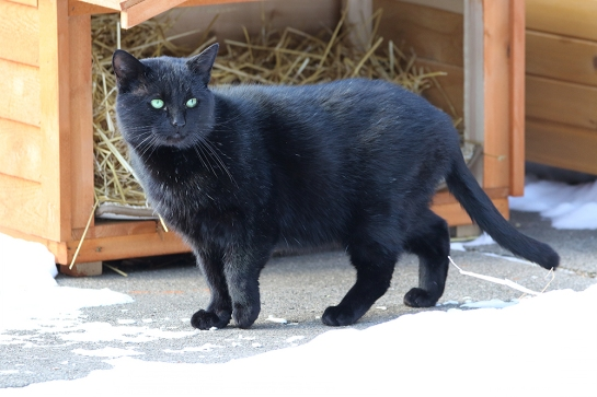 feral cat project We save cats by controlling cat overpopulation with humane tnr and finding permanent homes for the cats in our communities.